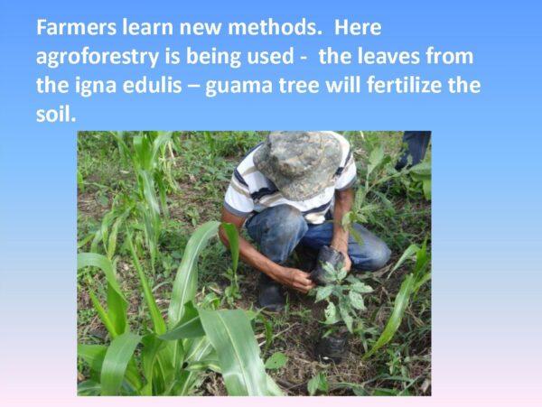 Agriculture Training - Slide 7