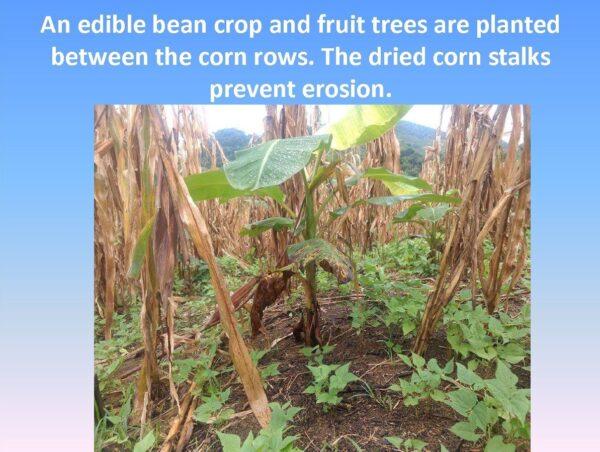 Agriculture Training - Slide 8