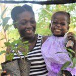Trees for home gardens, Haiti