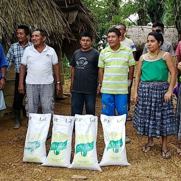 Biofortified seeds in Guatemala.