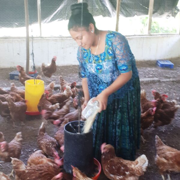 Chicken project at school in Guatemala.