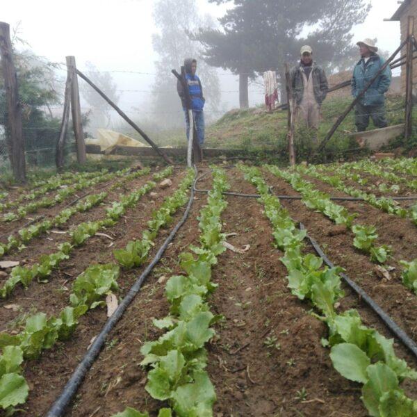 Irrigated garden in Bolivia.